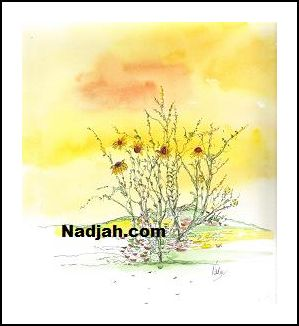 0078-Sunset-and-Daisies