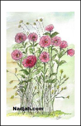 0079-Ten-Roses