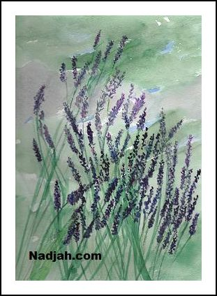 0086-Lavender-in-Bloom