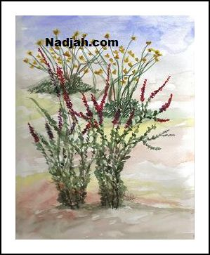 0089-Desert-Plants-Flowering