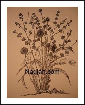 Nadjah Art New 29